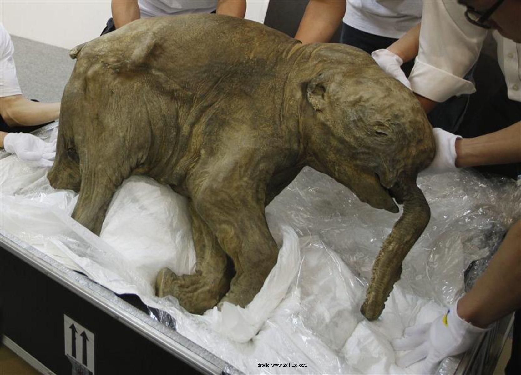 [Obrazek: mamut.jpg]
